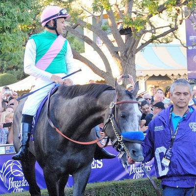 Arrogate at the Breeders' Cup