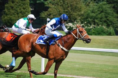 Bay Horses Racing