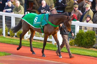 Horse Parading at Cheltenham Racecourse