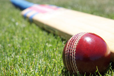 Cricket Ball and Bat Close Up