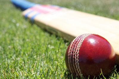 Cricket Ball and Bat Close Up