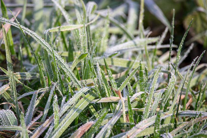 Frost Covered Grass Close Up