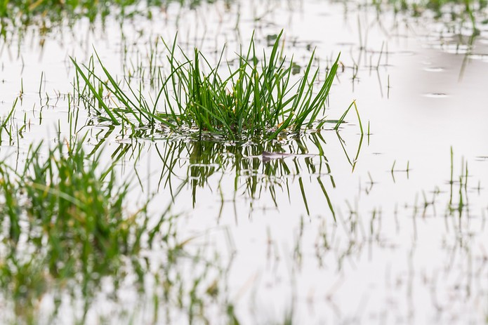 Grass Puddle