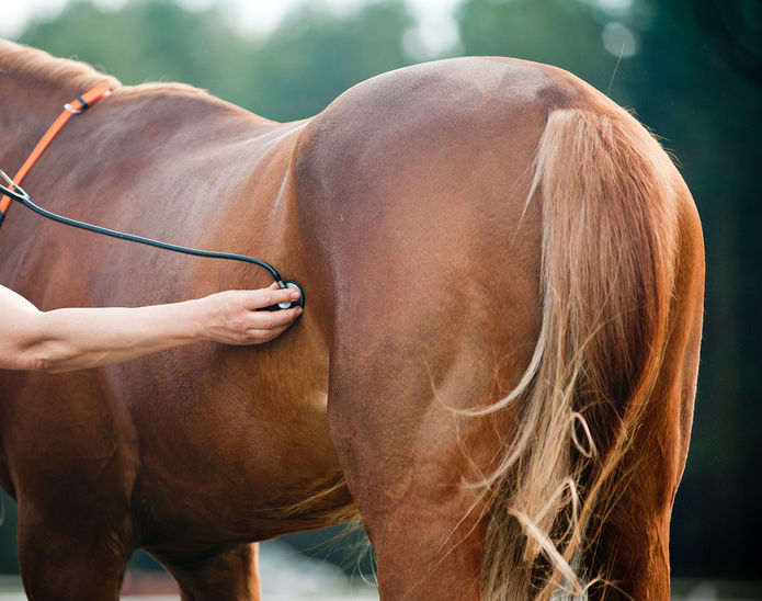 Horse Examined by Vet