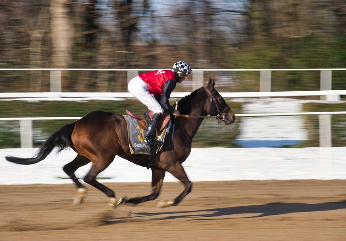 Horse Galloping in Winter on Artificial Surface