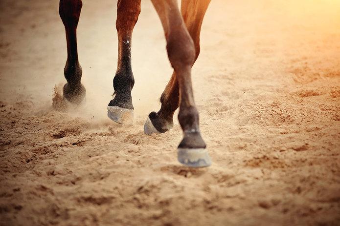 Horse Hooves on Sand