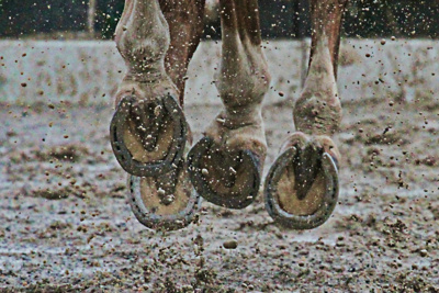 Horses Hooves in Mud
