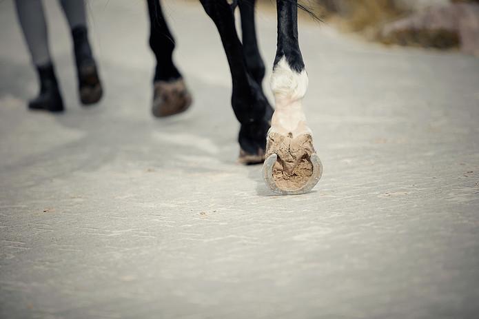 Horse Led on Path