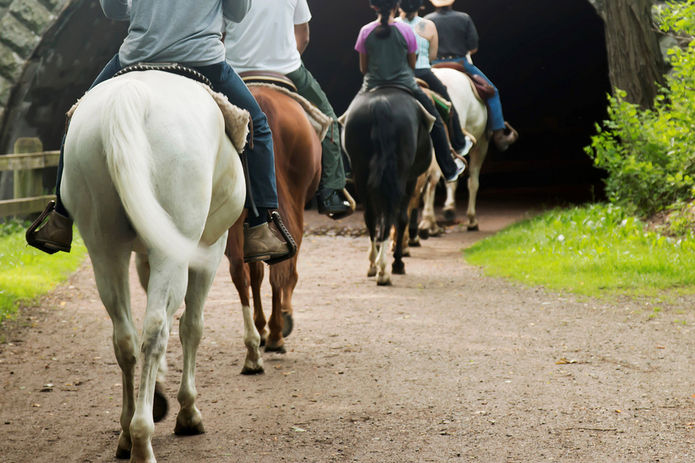 Horse Riding Family