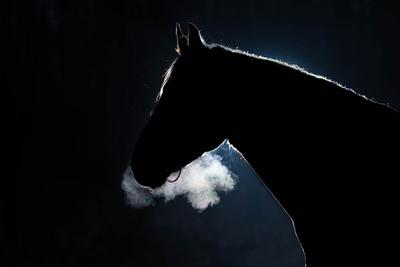 Horse Silhouette Dark Background