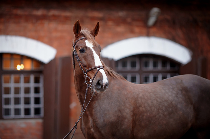 Horse and Brick Stables