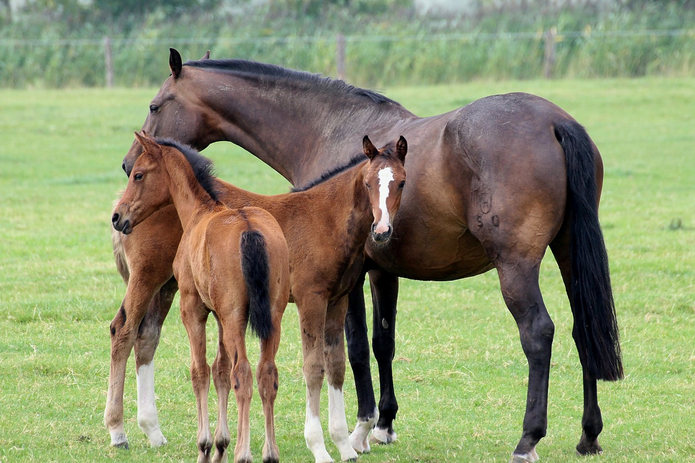 Horse and Foals