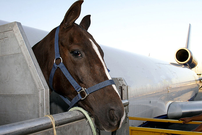Horse being loaded into aeroplane