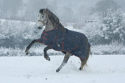 Horse Rearing Up in the Snow