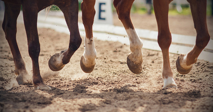 Horses Galloping on Sand