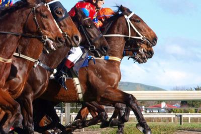 Horses Racing in Line