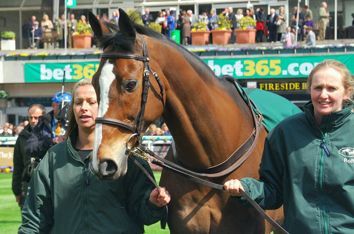 Cheltenham Gold Cup Winner Kauto Star