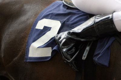 Racehorse with Number 2 Cloth