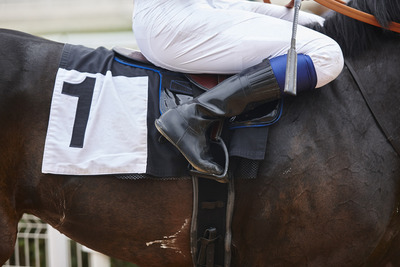 Racehorse Wearing Number 1
