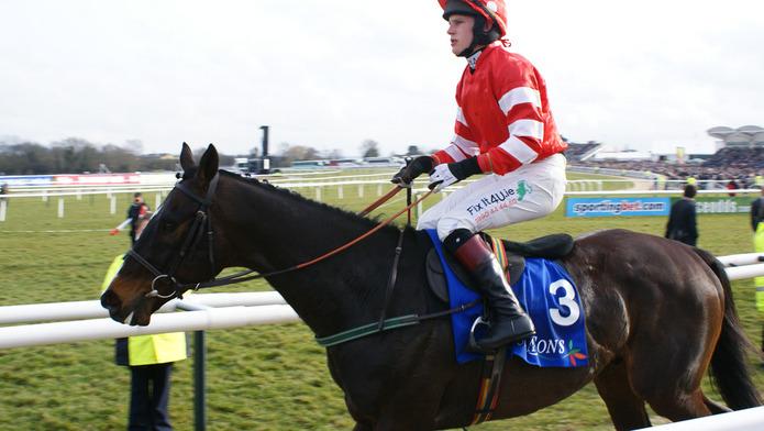 Racehorse at Cheltenham Festival