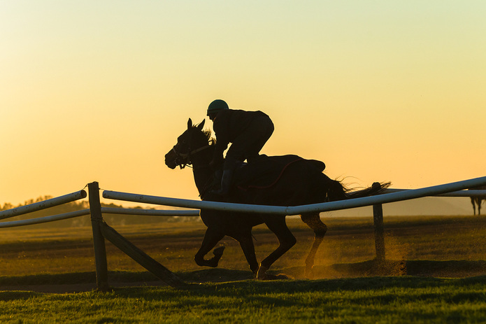 Racehorse on Gallops