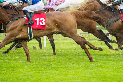 Racehorses in a Group