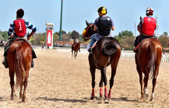 Racehorses on Synthetic Track