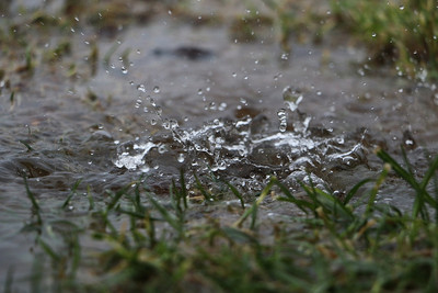 Rain Falling on Grass Puddle