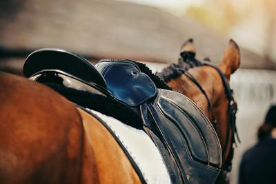 Saddle on Bay Racehorse