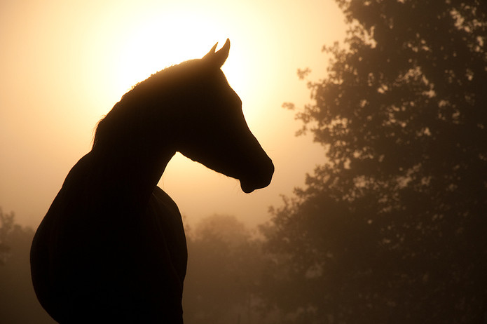 Silhouette of Horse Against Sunset
