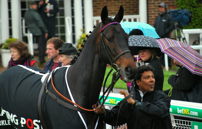 Double Champion Chase Winner Sprinter Sacre