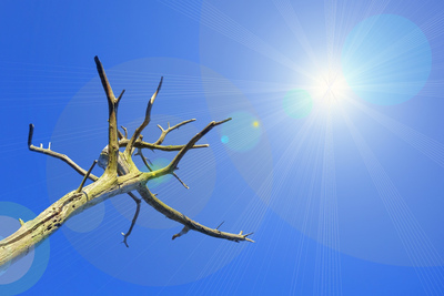 Hot Sun and Dead Tree