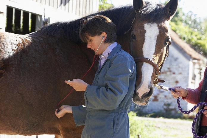 Vet inspecting horse