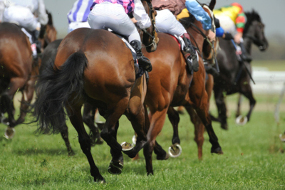 Horses During Race